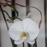 Цветочный хоровод-565. :: Руслан Грицунь