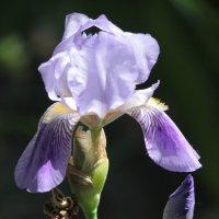 Цветочный хоровод-562. :: Руслан Грицунь