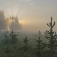 Туманное утро :: Валентин Котляров