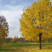 Осень. :: Александр Атаулин