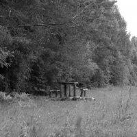 В лесу. :: Svetlana Singer