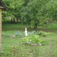 Маленькое привидение на огороде :: Марина Домосилецкая