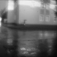 Грибной дождик :: galina bronnikova