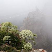 Ай-Петри в облаках. :: Алексей Окунеев