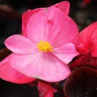 Цветочный хоровод-569. :: Руслан Грицунь