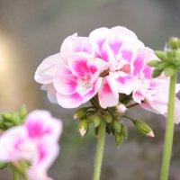 Цветочный хоровод-567. :: Руслан Грицунь