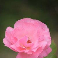 Цветочный хоровод-566. :: Руслан Грицунь