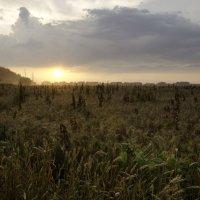 Закат над полем :: Наталья Лесовая