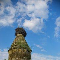 Аисты на монастырской башне :: Александр Лонский