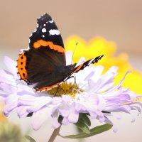 Осеннние бабочки :: Ната Волга