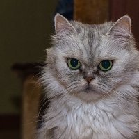 Кошка :: Евгений