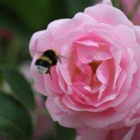 Цветочный хоровод-578. :: Руслан Грицунь