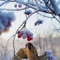 Winter fly :: Pavel Vorobiev