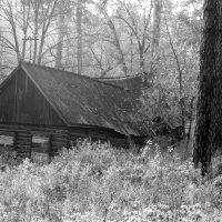 Старый дом в лесу :: Надежда