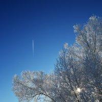Мороз и солнце... :: Алина Леликова