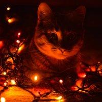 Кот и новый год. Курлешенька :: Алина Леликова