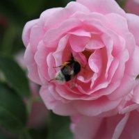 Цветочный хоровод-584. :: Руслан Грицунь
