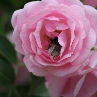 Цветочный хоровод-583. :: Руслан Грицунь
