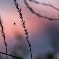закат :: Виктория Андреева