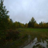 После дождя :: Николай Туркин