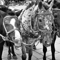 как ржет лошадь :: Лена Арефьева