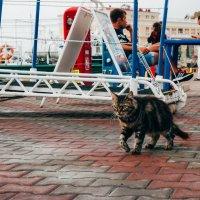 Котик...а взгляд то какой!!! :: Алена Ковалева