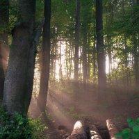 солнечный лес :: Elena Wymann