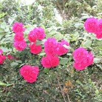 Цветочный хоровод-586. :: Руслан Грицунь