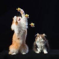 Не кормите кошек грибами! :: Анатолий Тимофеев