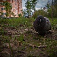 - :: Timur Sharipov
