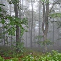 Призрачный лес :: Марина Кит