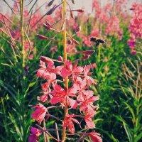 flowers :: Олександр Масний