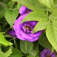 Фиолетовый цветок :: Владимир Виноградов