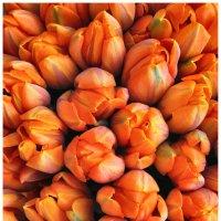 Оранжевый цвет :: Elena Bettella