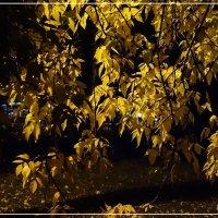 Ночьная листва осени :: Виктор Бондаренко