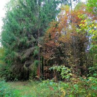 В лесу :: Svetlana27