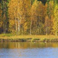 Осень. :: Галина Полина
