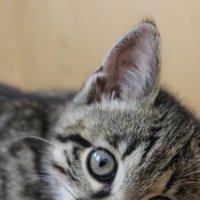 Кошка Тори :: Юлия Павлова