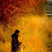 Осенний блюз #2 :: Хась Сибирский