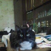 Кошка Глаша! :: Светлана Калмыкова