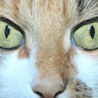 Кошка :: Виктория Трунова