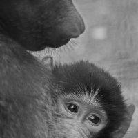 Материнство.... У нас почти так же.... :: M Marikfoto