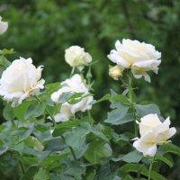 Цветочный хоровод-599. :: Руслан Грицунь