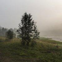 Туман на заливе :: Анатолий Иргл