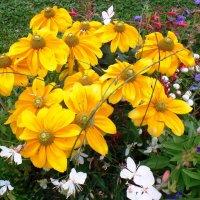 цветы августа. :: Марина Харченкова