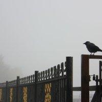 Туманным осенним  утром.. :: Ната Волга