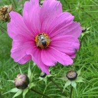 Цветок и пчёлка. :: zoja