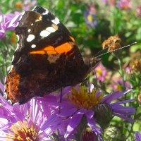 Бабочка :: Наталья Дмитриева