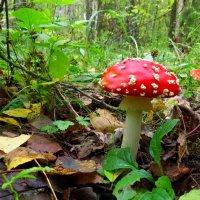украшение леса :: Сергей Цветков