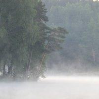 На лесном озере :: Юрий Цыплятников
